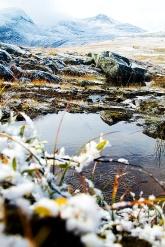Första isen lägger sig i liten pöl. Foto: David Erixon