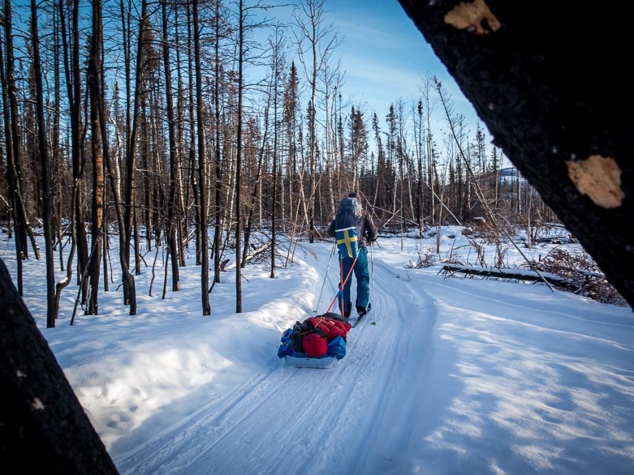 Vi skidar ofta genom skogar som drabbats av brand. Yukon är ett torrt område som på sommaren kan vara ganska varmt. Skogsindustrin är inte särskilt omfattande så när det brinner får det fortsätta tills det slocknar om det inte hotar någon bebyggelse. Foto: David Erixon