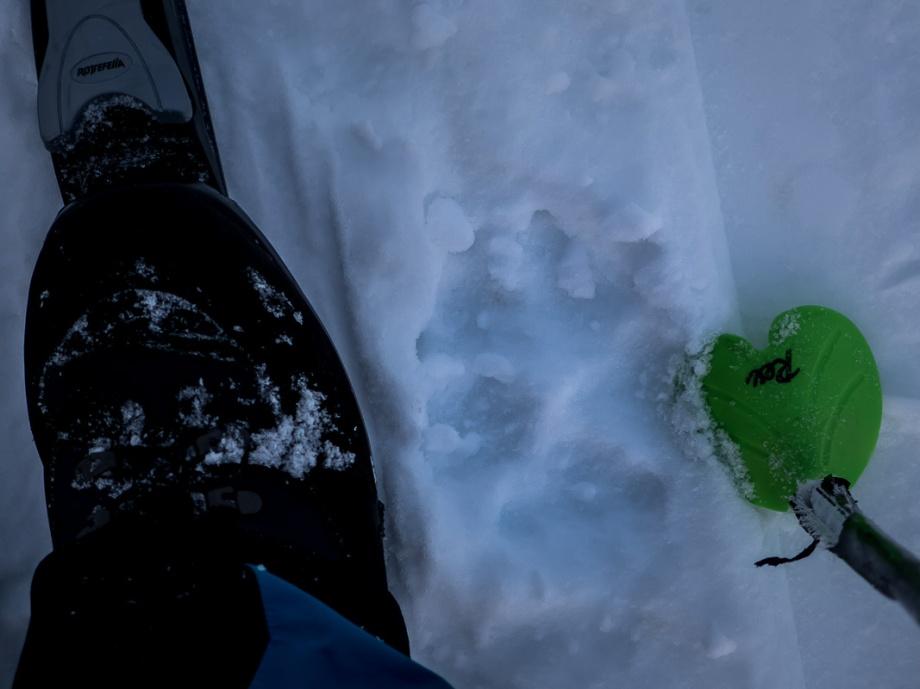 Vargar har nästan lika stora tassar som jag. Mäktig upplevelse. Foto: David Erixon