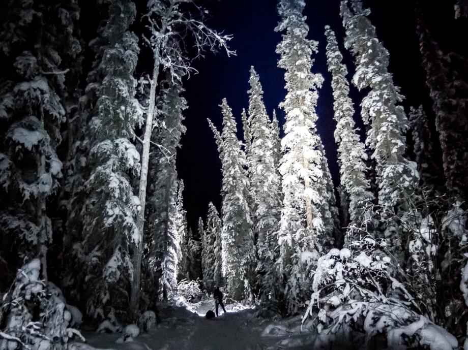 Vi skidar fram bland snötyngda granar under Yukon Arctic Ultra Foto: David Erixon