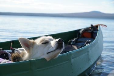 Sköna stunder i kanoten. Foto: Linnea Nilsson-Waara